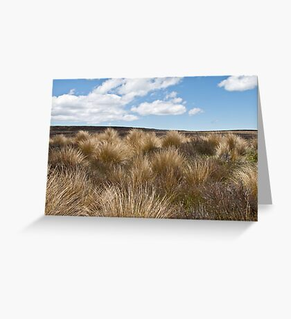 tussock in central plateau of NZ Greeting Card