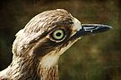 Bush Thick Knee by Eve Parry
