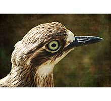 Bush Thick Knee Photographic Print