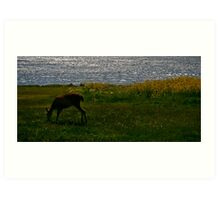 Deer at Dusk in Port Townsend Art Print