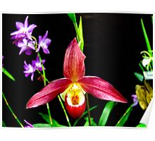 startled Orchids Poster