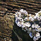 Fungi Heart by elasita