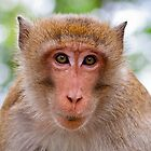 Monkey Face by Ben Cordia