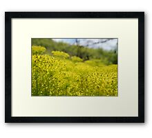 Yellow Flower Patch Framed Print