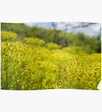 Yellow Flower Patch Poster