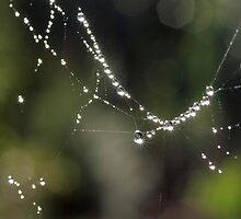 Diamonds on the Web by John Sharp