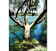 Thirsty Tree Photographic Print