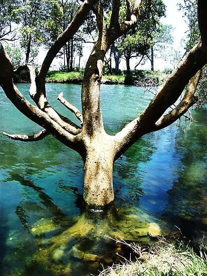 Thirsty Tree by mark thompson