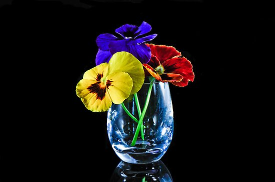 Pansies by Tom Newman