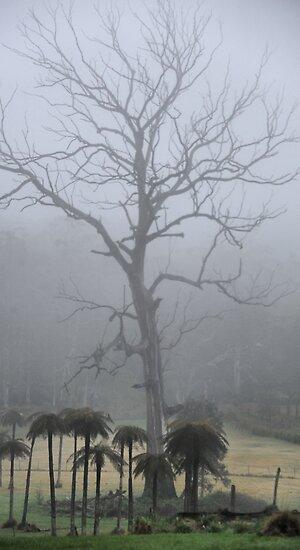 Prehistoric Scenery - Mt Wilson NSW Australia by Bev Woodman