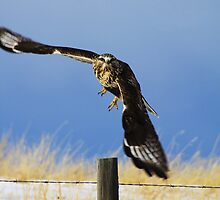 Take Off!! by Alyce Taylor