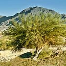 Tree in the Desert Southwest by barnsis