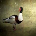 Red Beak by Carol Bleasdale