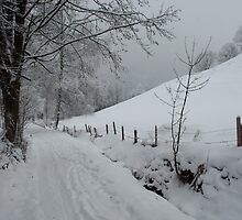 Snowy path near Thumersbach by Rob Schoon