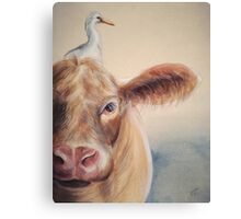 Roundabout Cow Canvas Print