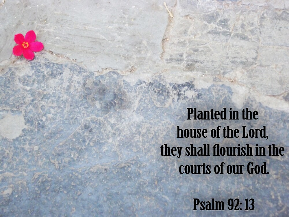 Planted in Christ by Shemah Appleton