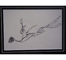 Kelp! - I've been framed Photographic Print