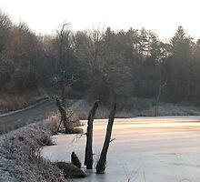 Frosty January Morning Along The Pond by Geno Rugh