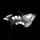 White Butterfly by Christine  Wilson