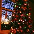 Tree Lights at Sunset! by Amy Herrfurth