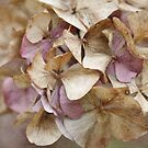 Textured Hydrangea by Astrid Ewing Photography