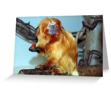 Golden Lion Tamarind with strawberry! Greeting Card