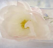 tea rose by Teresa Pople