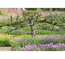 A terrific horizontal tree! Photographic Print