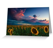Skies Of A Summer Sunset Greeting Card