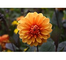 Orange Flower Photographic Print