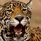 a portrait of Jaguar 004 by yesdigiterarte