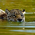 swimming Jaguar 001 by yesdigiterarte
