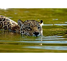 swimming Jaguar 001 Photographic Print