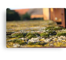 Years of moss at work Canvas Print