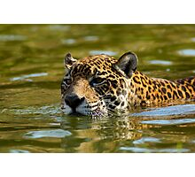 swimming Jaguar 003 Photographic Print