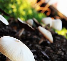 Keep on 'shrooming' by JHuntPhotos