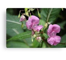 Hoverfly Flower Canvas Print