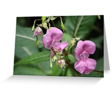 Hoverfly Flower Greeting Card