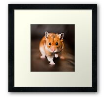 A hamster called Ratty Framed Print