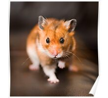 A hamster called Ratty Poster