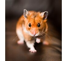 A hamster called Ratty Photographic Print
