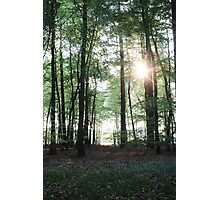 Breaking through the trees Photographic Print