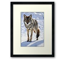 Born Free Framed Print
