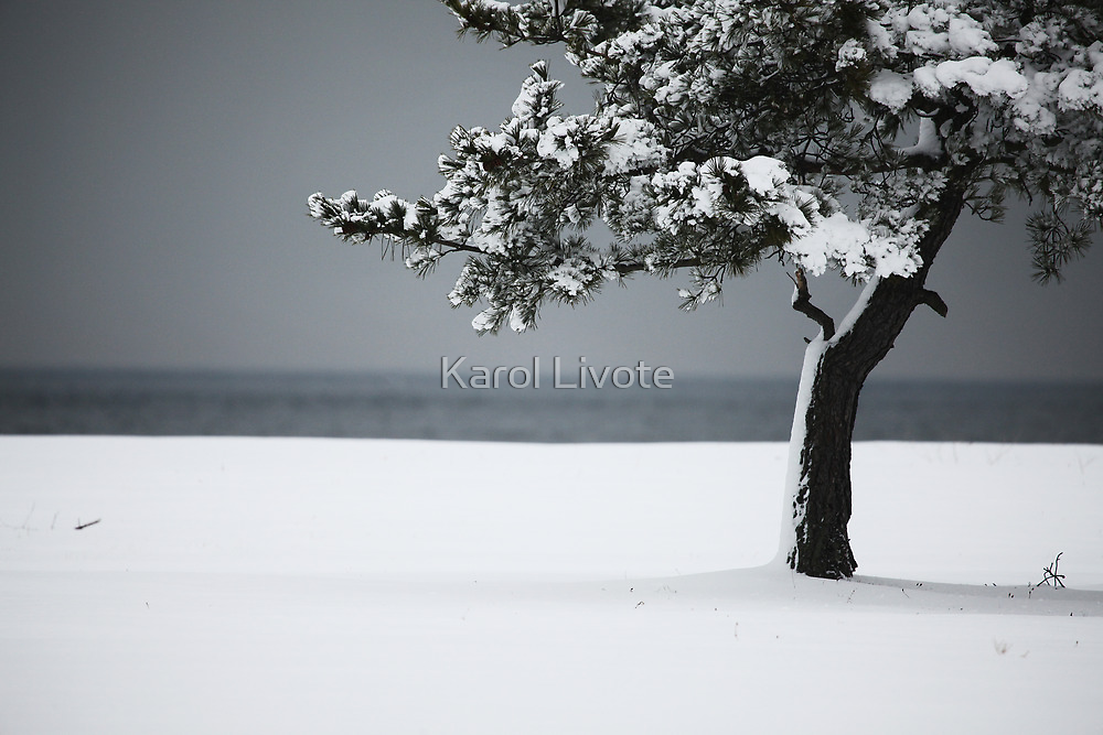 Winter Quiet by Karol Livote