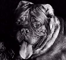 Rocki portrait by ulryka