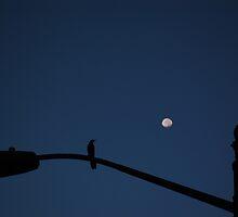 Lunar Calling by WishboneJosh
