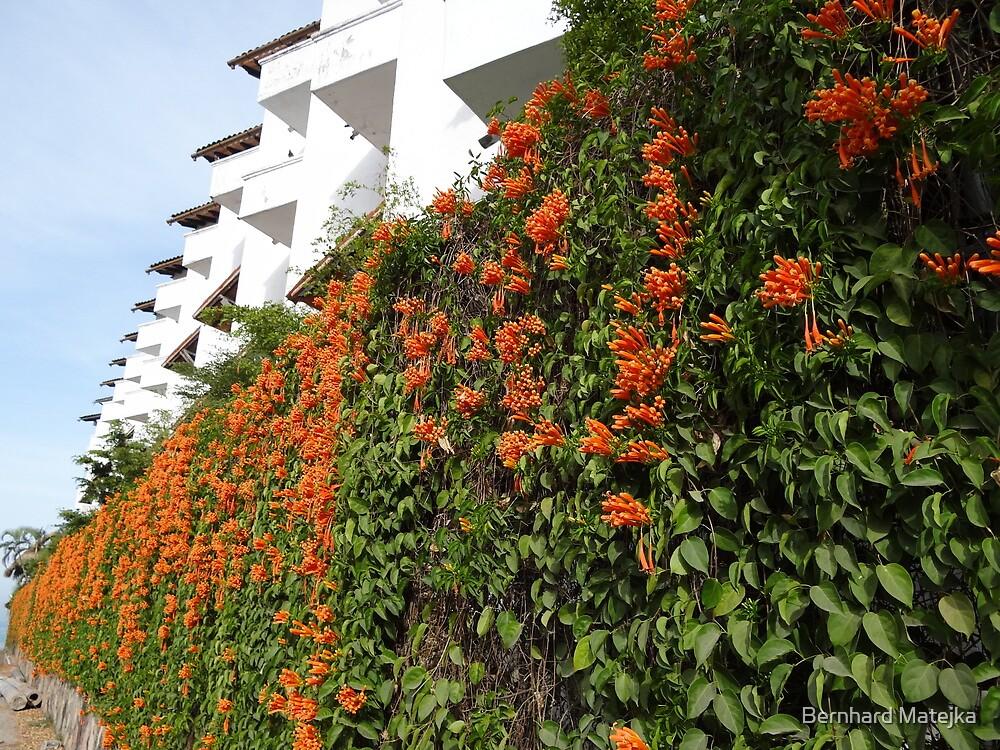 Architecture And Plants - Arquitectura Y Plantas by Bernhard Matejka
