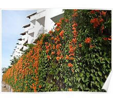 Architecture And Plants - Arquitectura Y Plantas Poster