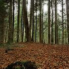 my forest by Patrick Monnier