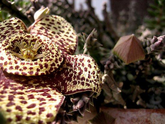 Flor de lagarto   by Honeyboy Martin